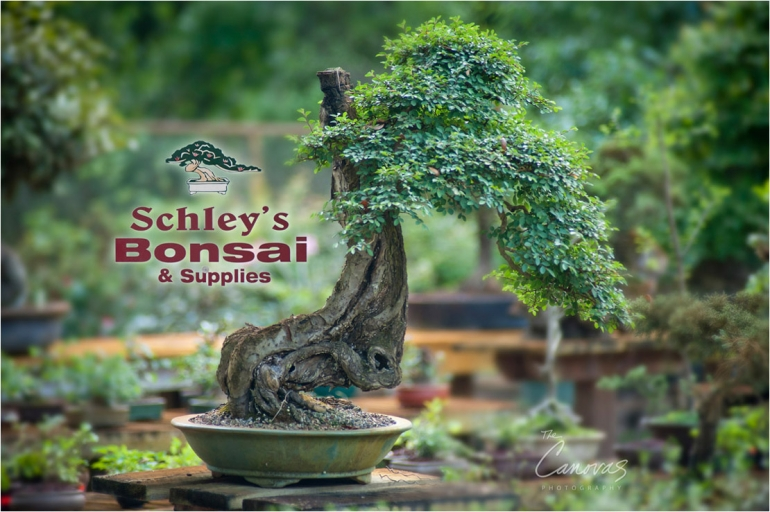 01_DeLand_Schleys_Bonsai_Openning_event_photography